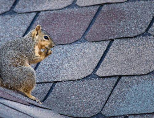 5 signes qui montrent qu'il est temps de remplacer votre toit.